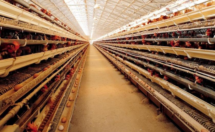 温湿度等环境对禽舍、养殖场的应用