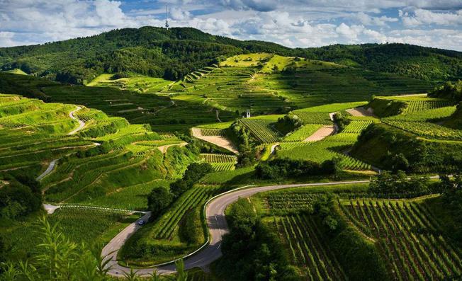 建设农业农村大数据中心,实现科学高效管理