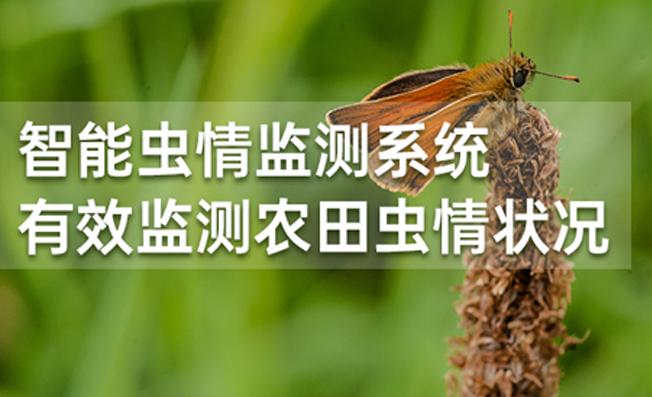 智能虫情监测系统 有效监测农田虫情状况